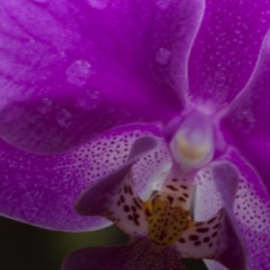 Asiste al Festival Internacional de la Orquídea en Coatepec, Veracruz