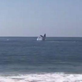Captan ballena en puerto de Acapulco tras la ausencia de turistas