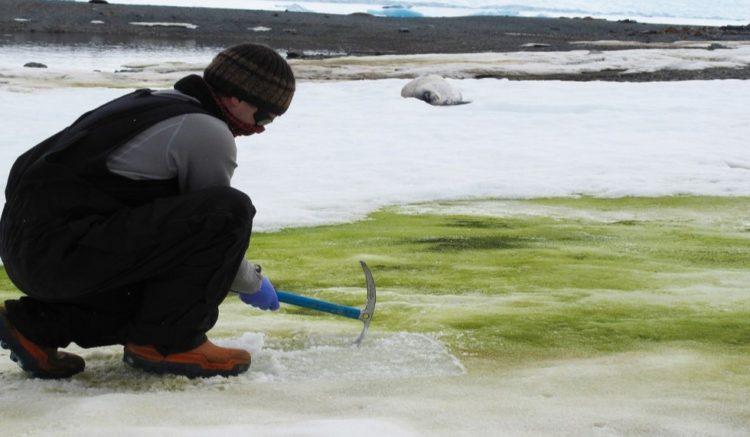 nieve-verde-en-la-antártida