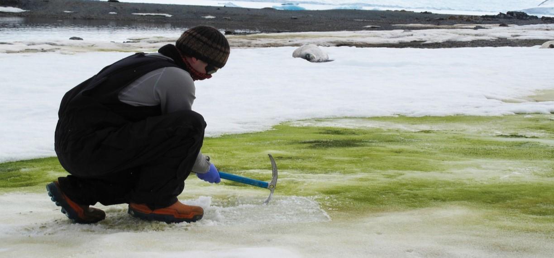 Nieve verde, la Antártida sufre efectos del cambio climático