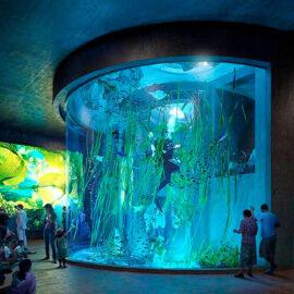 Mazatlán tendrá el acuario más grande de Latinoamérica