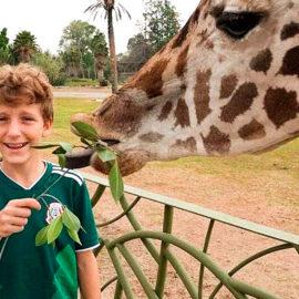 Descubre Africam Safari a puerta cerrada con tu familia