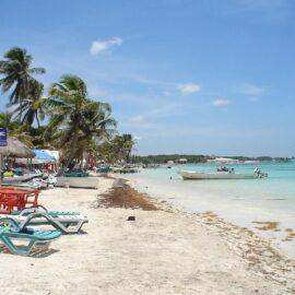 El sargazo que llega a las playas del Caribe mexicano puede ser dañino