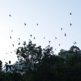 Escápate a un destino de naturaleza después de la pandemia
