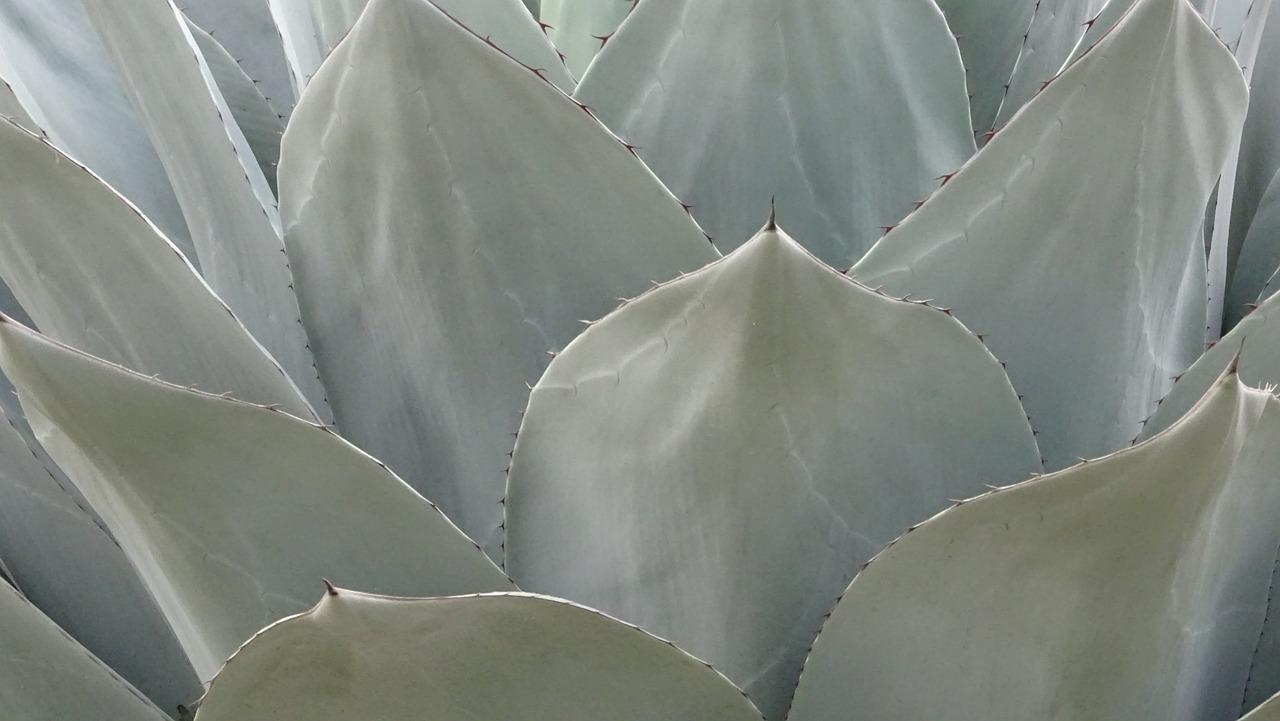 Puebla podría ser sede de la mezcalería más grande de América Latina