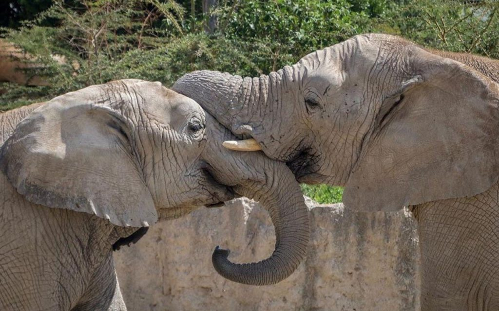 Elefantes Africam