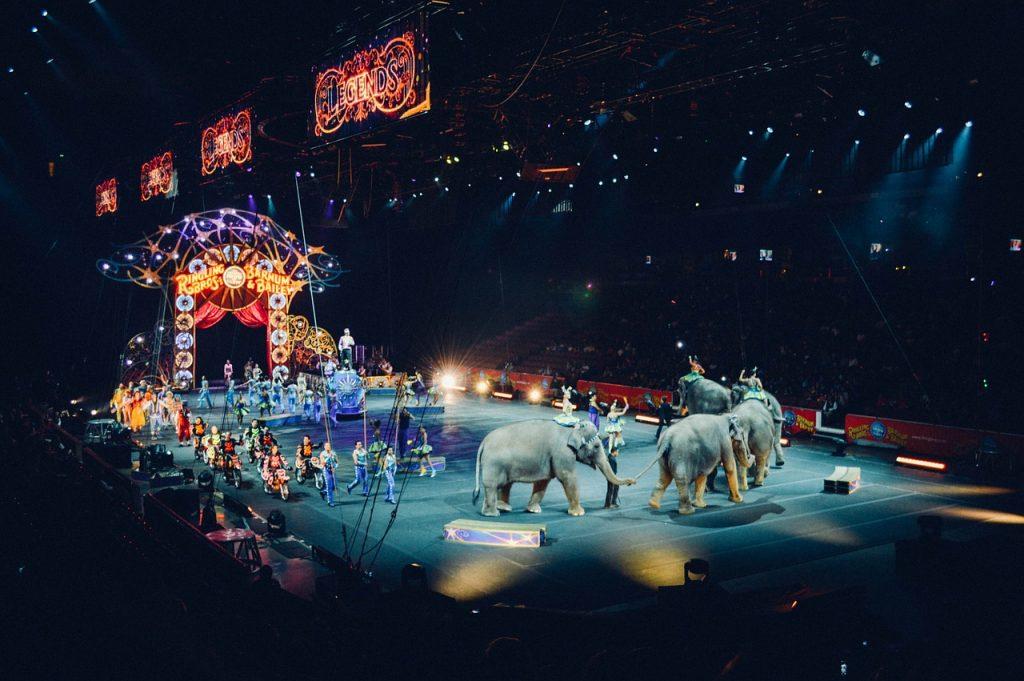 Francia prohibirá animales en circos y parques acuáticos