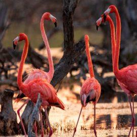Yucatán lanza su sitio web de promoción turística