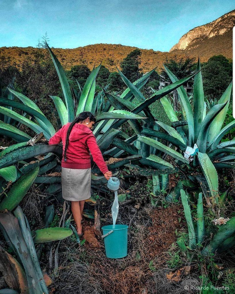 bebidas típicas México sin alcohol