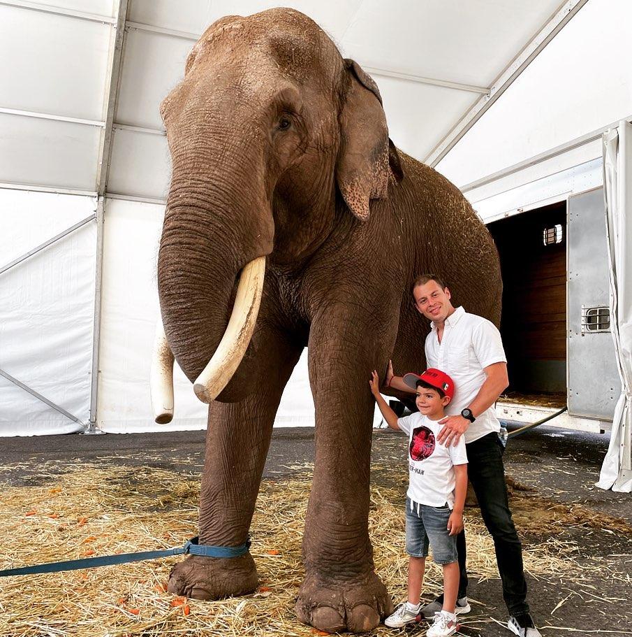 big boy elefante en cautiverio