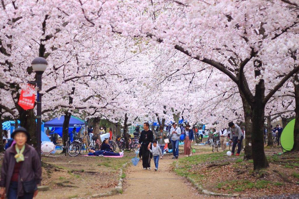 árbol de sakura