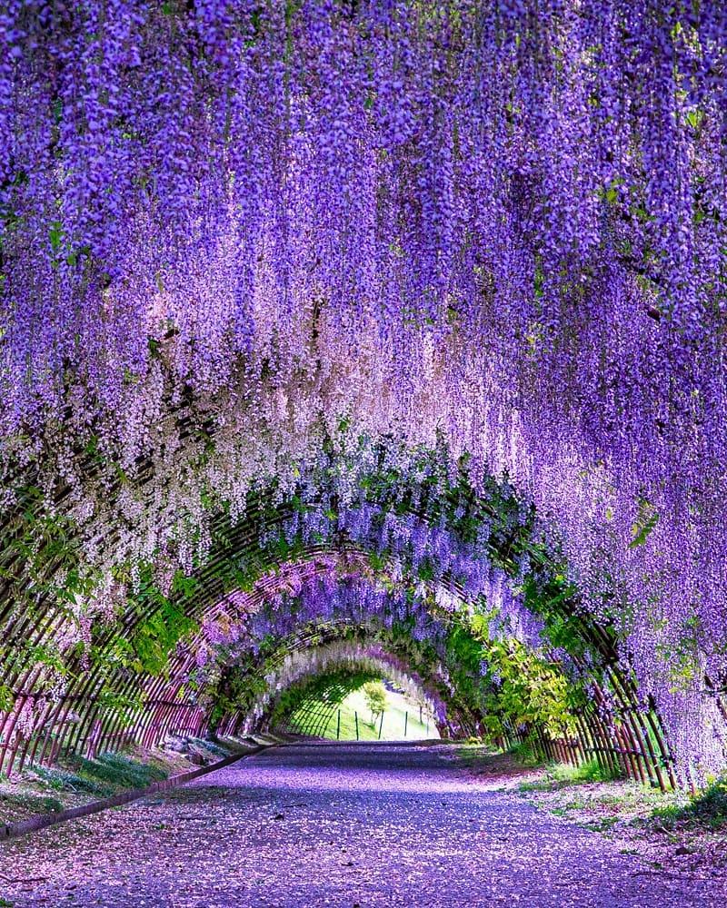 jardines de kioto Kawachi Fuji