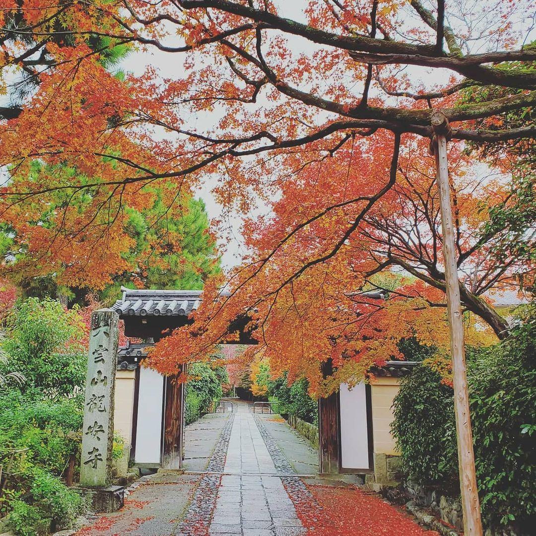 jardines de kioto Ryoan-ji