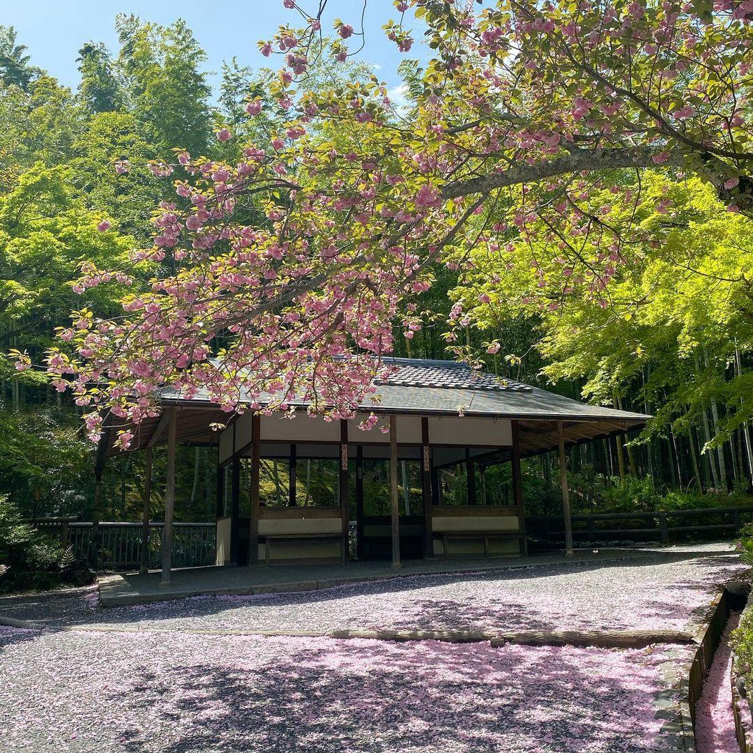 jardines de kioto Tenryū-ji