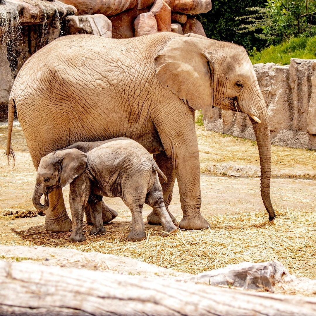 zoológicos en México Africam Safari