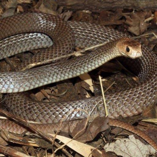 10 animales de Australia