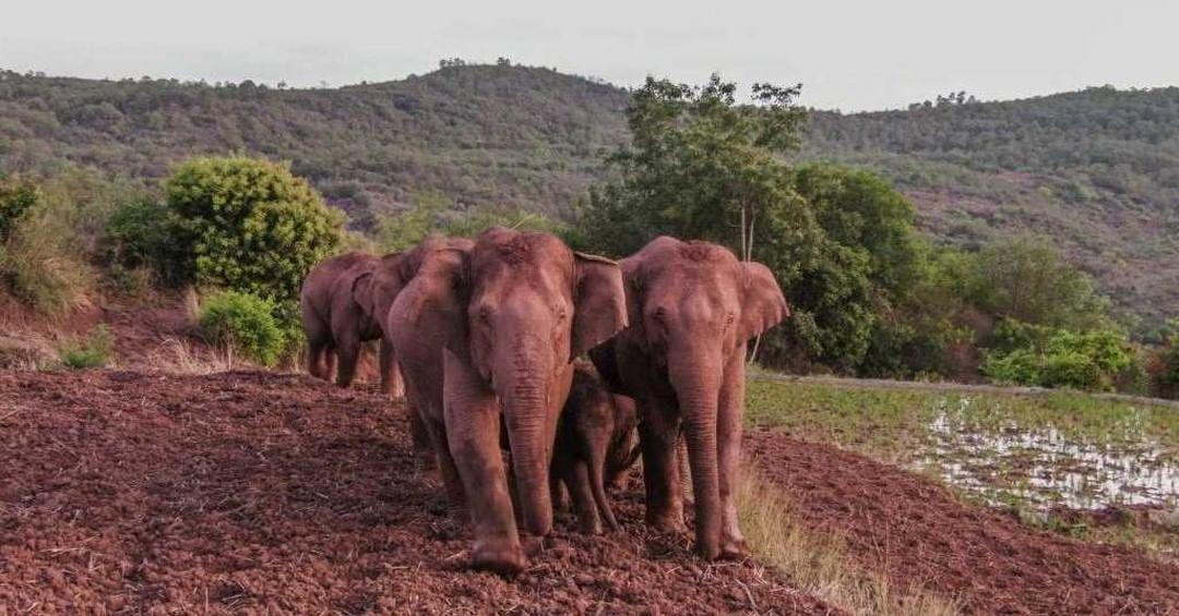 elefantes virales en china
