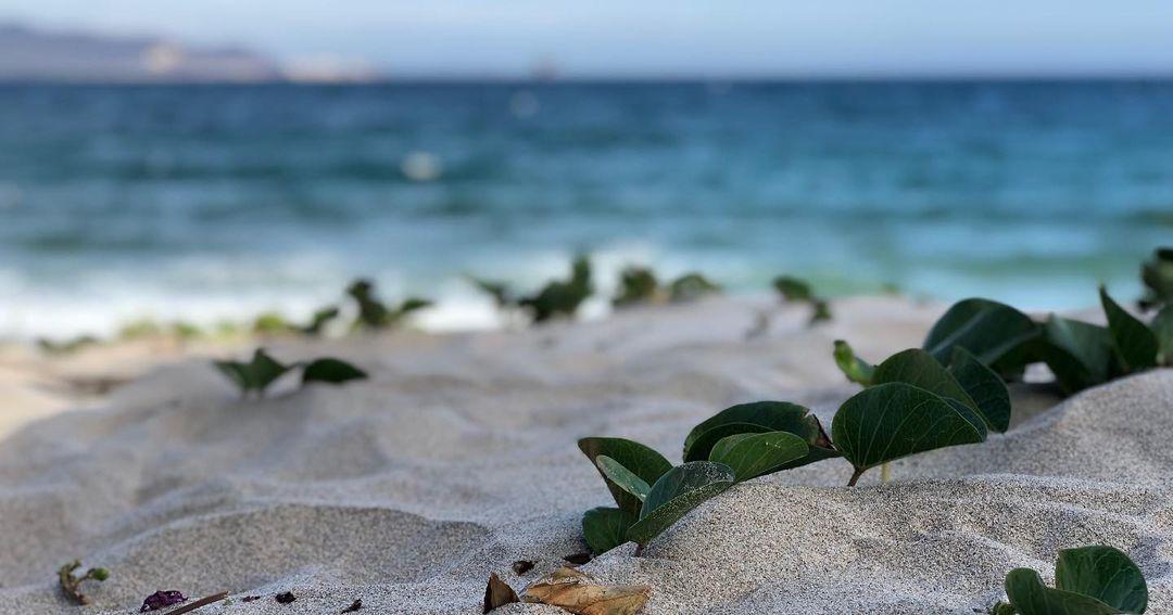 playa chipehua como llegar