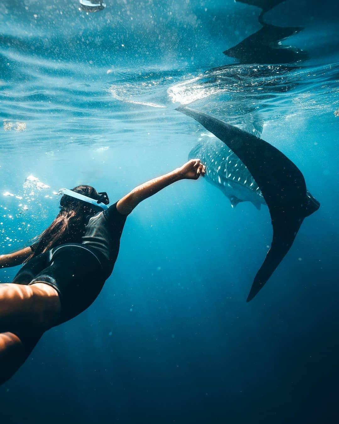 tiburón ballena caribe mexicano