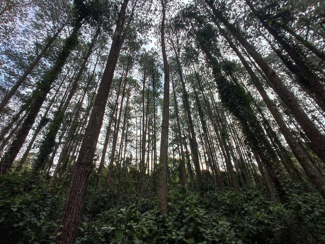 bosque de niebla en veracruz