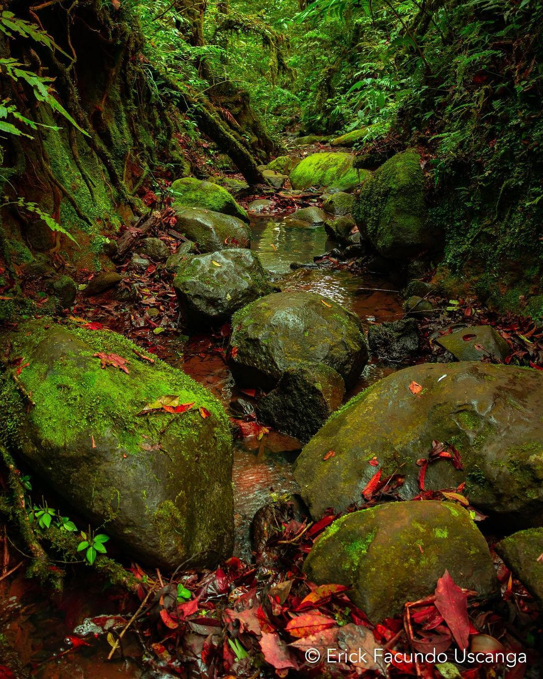 tipos de bosques en veracruz