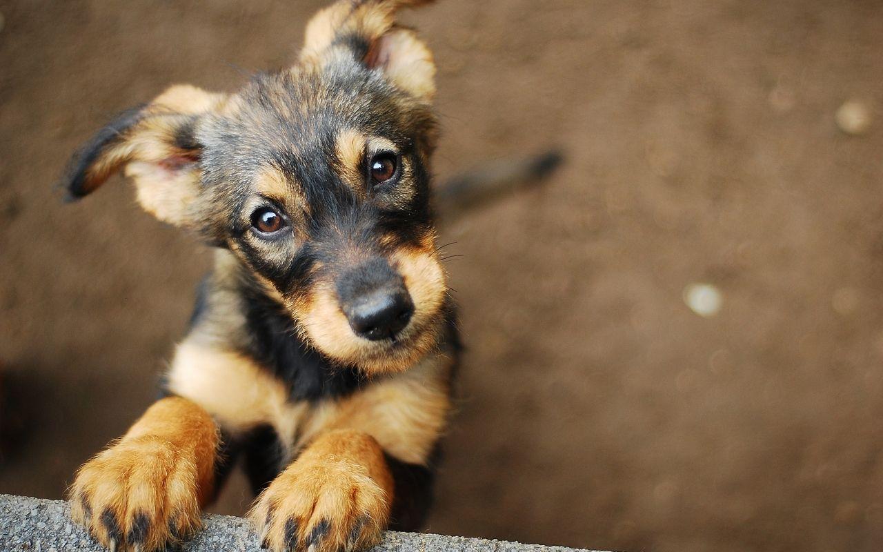 adopción de perros en cdmx