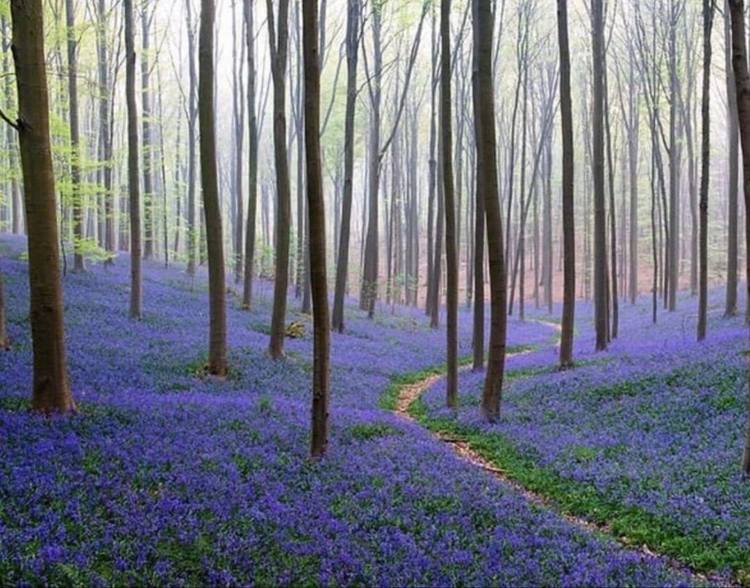 bosque azul brusellas