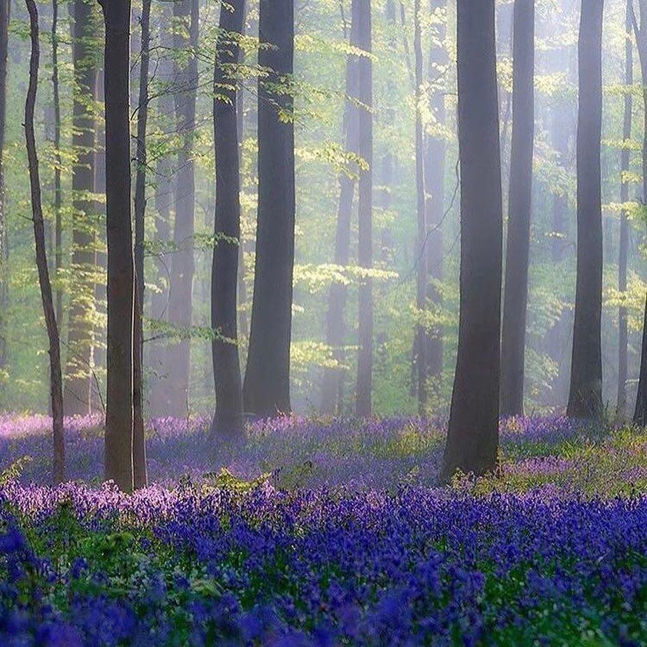 bosque de hallerbos