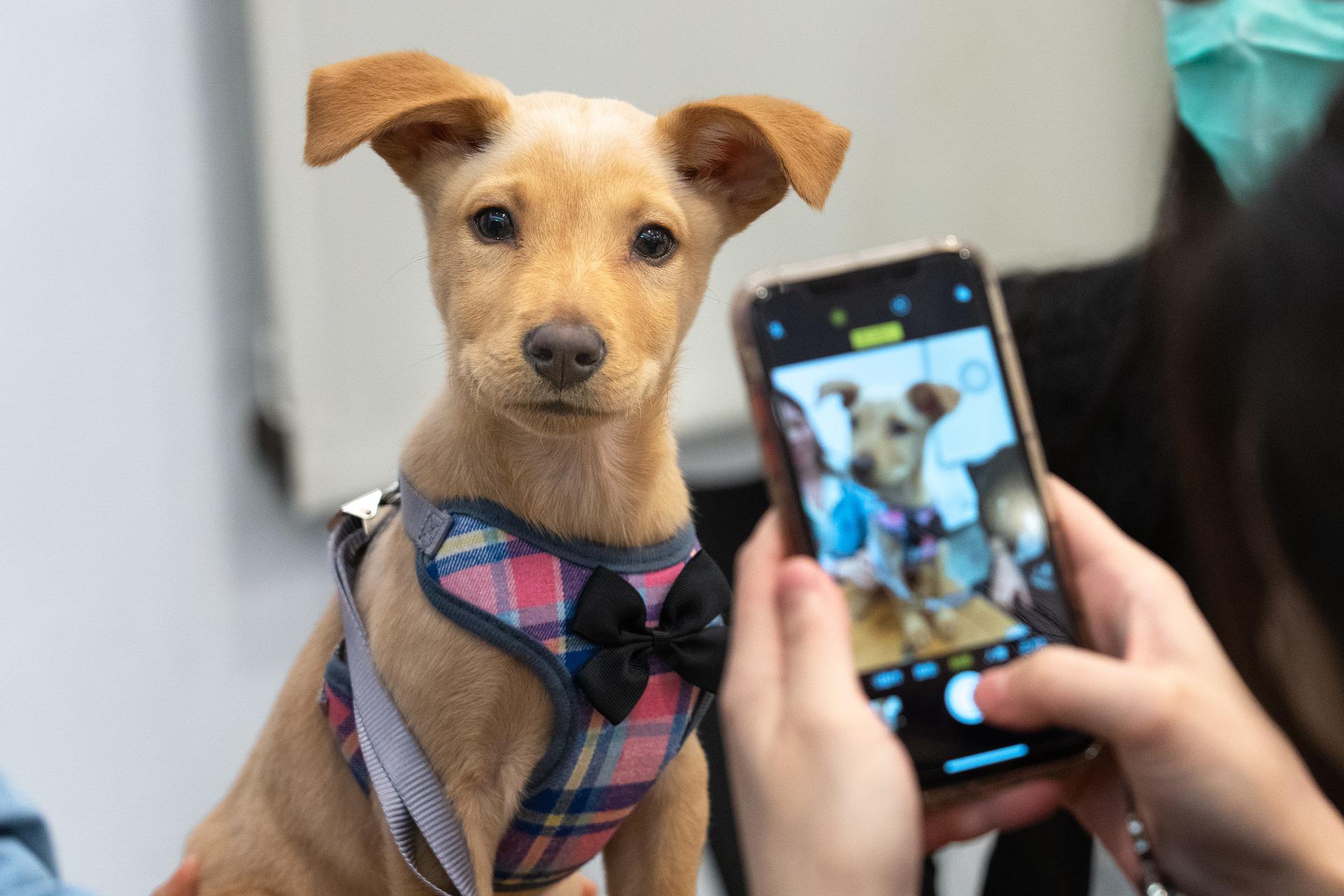 perros en adopción cdmx