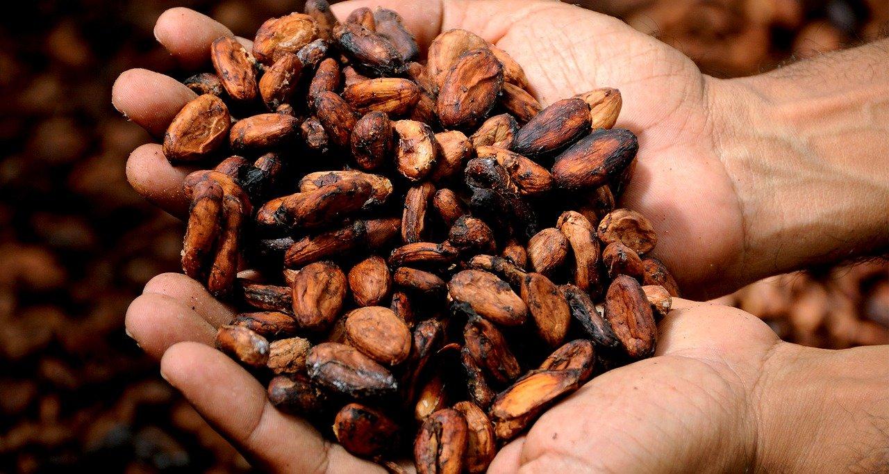 cacao chocolate leyenda mexico